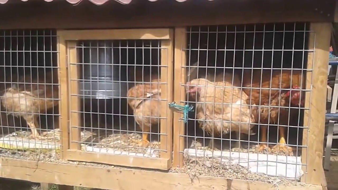ตะแกรงกรงนก กรงไก่